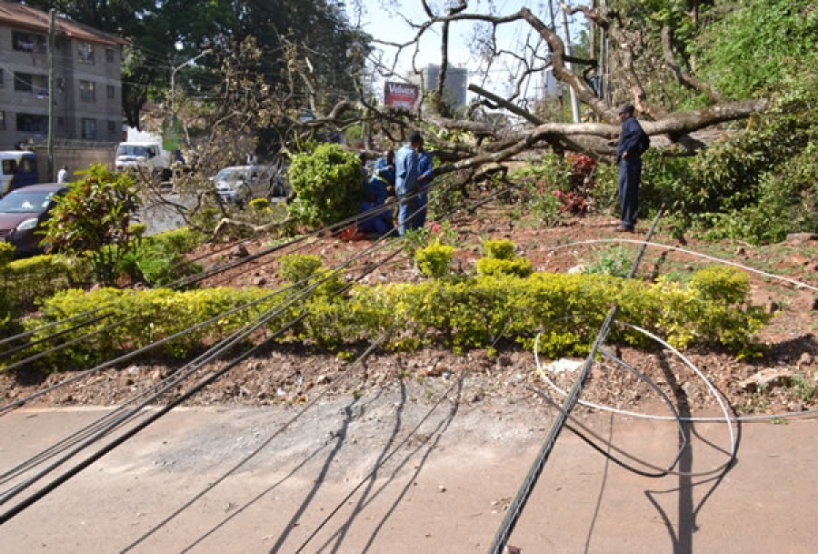 Fallen tree that damaged power line in Westlands affecting power supply on Rhapta road, Riverside Drive and parts of Kileleshwa area.