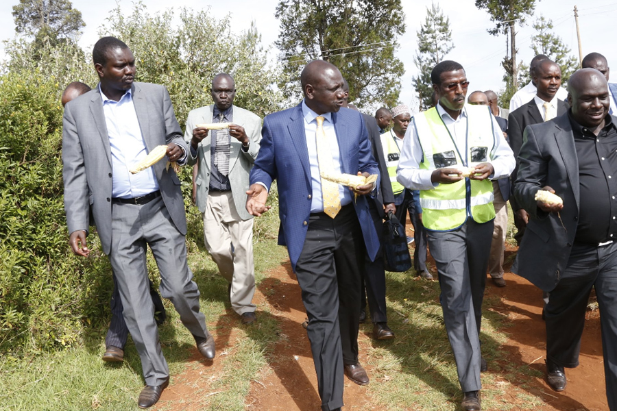 Hon. Deputy President William Ruto and MD & CEO Dr. Ben Chumo enjoy boiled maize after successfully launching Last Mile Project in Tarakwa Ward, Kesses Constituency, Uasin Gishu County.